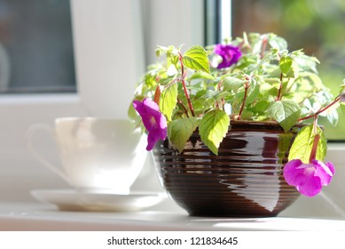Ceramic pot with plant and white cup and saucer on the window sill