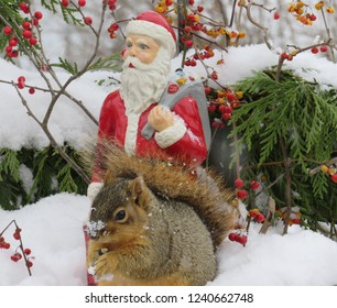 Ceramic vintage Santa Claus looking over a squirrel with a snow covered nose, with red bittersweet berries and evergreen boughs in the background.