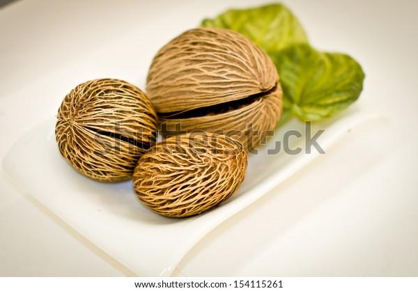 cerbera odollam dried seed