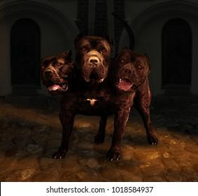 Cerberus the mythological three head  dog