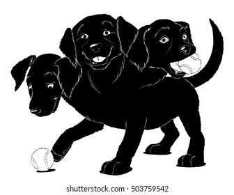 Cerberus, three-headed puppy of Hades, plays with a couple tennis balls.