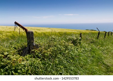 Cereal field crop and fence posts next to the sea with sunshine and blue sky