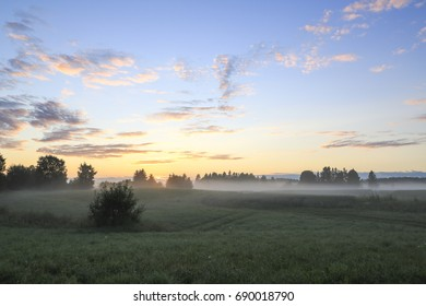 Cereal field in the sun mist
