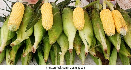 cereal grain maize