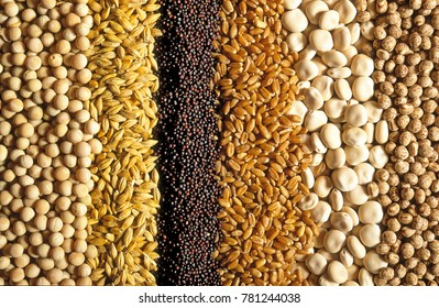 Cereal grains, with a great amount of cereal growing all over the World Australia grows quite a variety from canola to chickpeas for human consumption and animal feed.