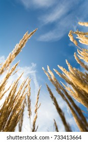 cereals against blue sky as low angle shot