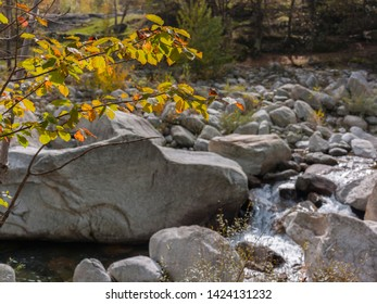 Ceresole Reale, Grand Paradise National Park, Piedmont, Italy - October 10, 2012: Leaves in fall, with the Orco river flows through the forest.