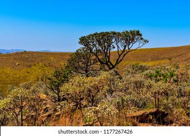 cerrado brazilian vegetation