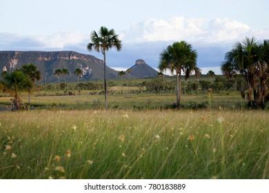 """Cerrado"" ecosystem at Jalapao Natural Park, Tocantins, Brazil"