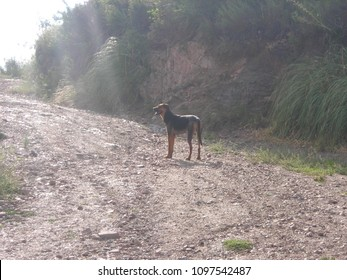 Cerro  Banderita, La Falda, Argentina, November 7 2014: Dog waiting for it`s owner on the way up to the forrest.
