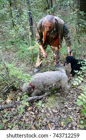 CERTALDO, ITALY – OCTOBER 10, 2017: A truffle hunter works with his Lagotto Romagnolo dogs as they identify where to dig for truffles in Certaldo.
