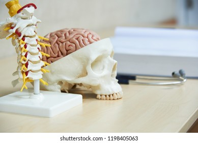 Cervical spine and brain on skull model, stethoscope and medical textbook on the desk in medical office