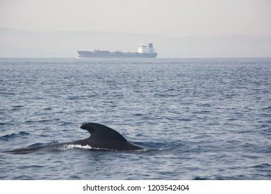 cetaceans under the sea