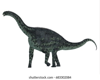Cetiosaurus Dinosaur Side Profile 3d illustration - Cetiosaurus was a herbivorous sauropod dinosaur that lived in Morocco, Africa in the Jurassic Period.