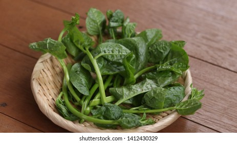 Ceylon Spinach Good vegetables for the digestive system