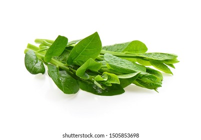 Ceylon Spinach isolated on a white background, photography