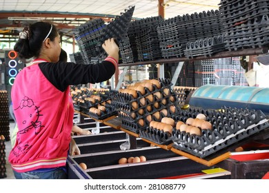 CHACHOENGSAO Province  THAILAND - MARCH : The girls are working on production line in eggs farm. on March 2015 at Chartraksa farm in Chachoengsao Province, Thailand