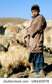 Chaghcharan, Ghor Province / Afghanistan - Aug 23 2005: A young shepherd tends his flock near Chaghcharan in a remote part of Central Afghanistan. Shepherd and flock of sheep, Afghanistan.