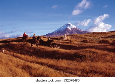 """""""Chagras"""" cowboys riding on the moors of Cotopaxi National Park"""