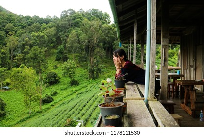 CHAIGMAI, THAILAND - AUGUST 17 2018; Asian women stood watch at a tea plantation on the mountain.