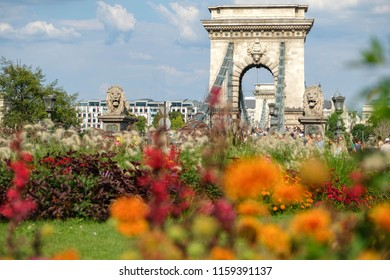 Chain Bridge in Budapest, Hungary on a bright summer day with colorful flowers in the foreground