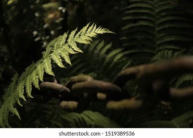 Chain and fern (macro photo)