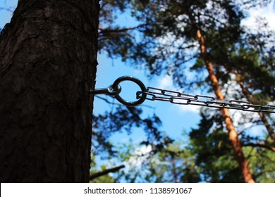 chain and ring to the pine for fixing a person and flogging. concept of sadomasochism, reportage photography.