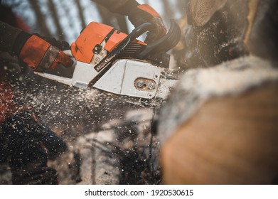 Chainsaw. Close-up of woodcutter sawing chain saw in motion, sawdust fly to sides. Chainsaw in motion. Hard wood working in forest. Sawdust fly around. Firewood processing.