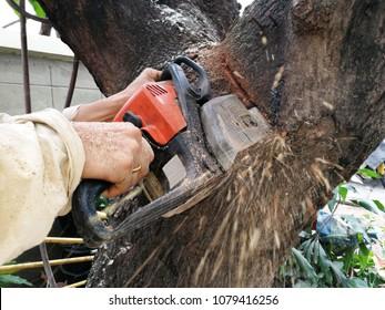 chainsaw cut down trees