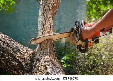 Chainsaw cutting trunk
