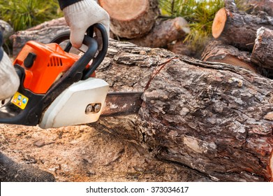 Chainsaw man sawing pine.