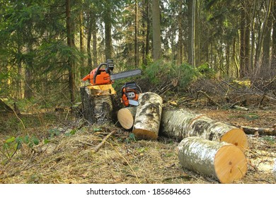Chainsaw to the stump felled tree