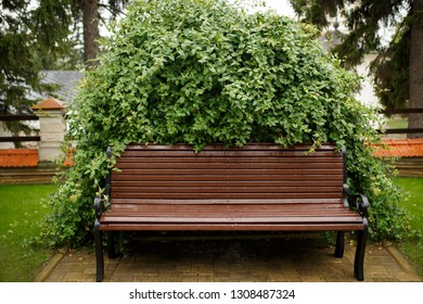 chair between bushes