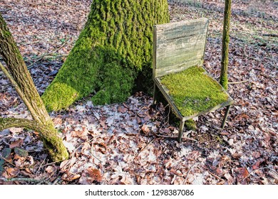 the chair full of moss at the foot of a tree