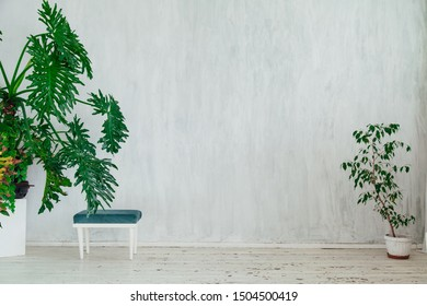 chair with green plants in a vintage white room