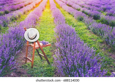 A chair with a hanged over hat, an open book and a bunch of lavender flowers between the blooming lavender rows under the summer sunset rays. Dream and relax concept.