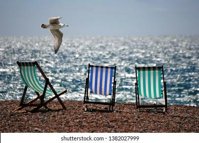 chair on the beach with flying bird