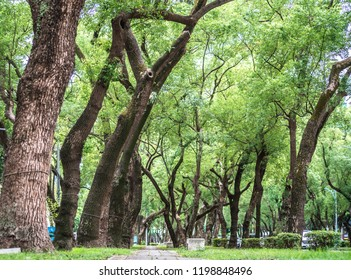 a chair in the park, relaxing, Banyan trees on Dunhua Road, Taipei. feeling calm
