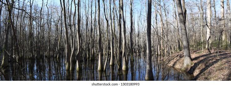 Chakchiuma Swamp in Lee Tart Nature Preserve in Grenada Mississippi