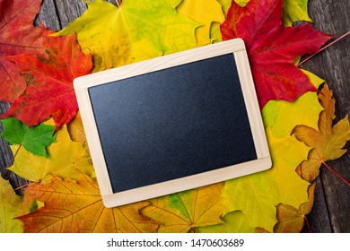 Chalkboard with wooden frame on maple leaves background. Autumn concept