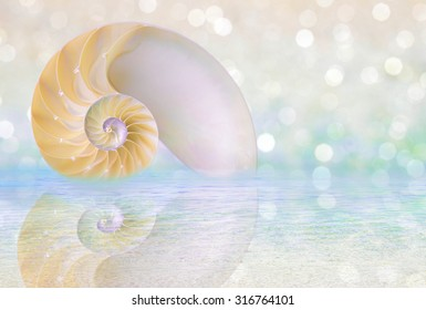Chambered Nautilus cutaway Shell on beach reflected in water