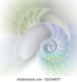 Chambered Nautilus cutaway Shells over colorful background