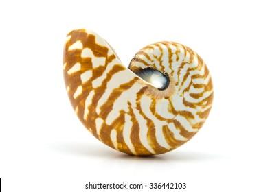 Chambered Nautilus seashell isolated on white background