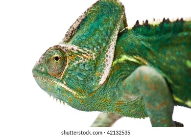 chameleon camouflage isolated with clipping path
