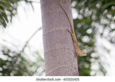 Chameleon changes color