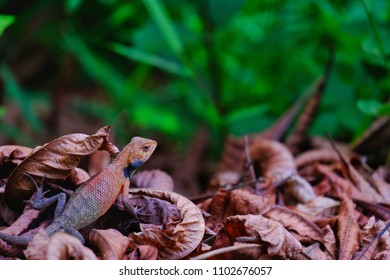 Chameleon, changing color according to surrounding environment