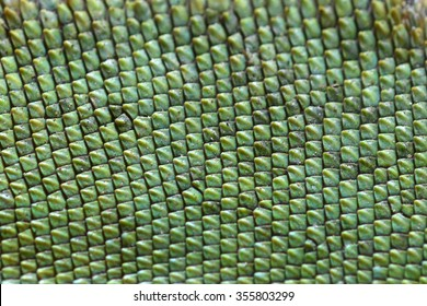 Chameleon lizard skin pattern textured green backgrounds