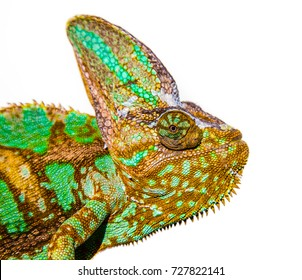 chameleon photo close-up isolated on the white