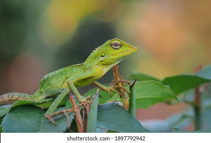 a chameleon that changes color to resemble a leaf