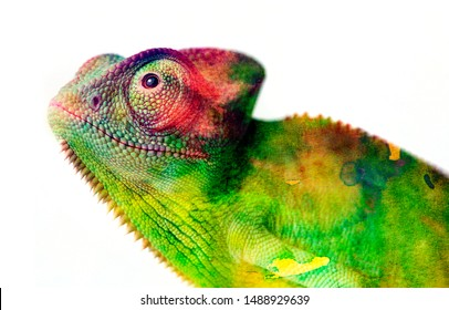 chameleon - and water colors